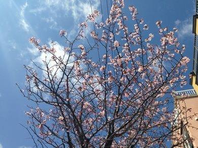 春が来ました♪ 新企画公開直前告知 & スタッフblog更新中